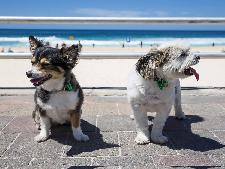 Take your pup for a beach visit