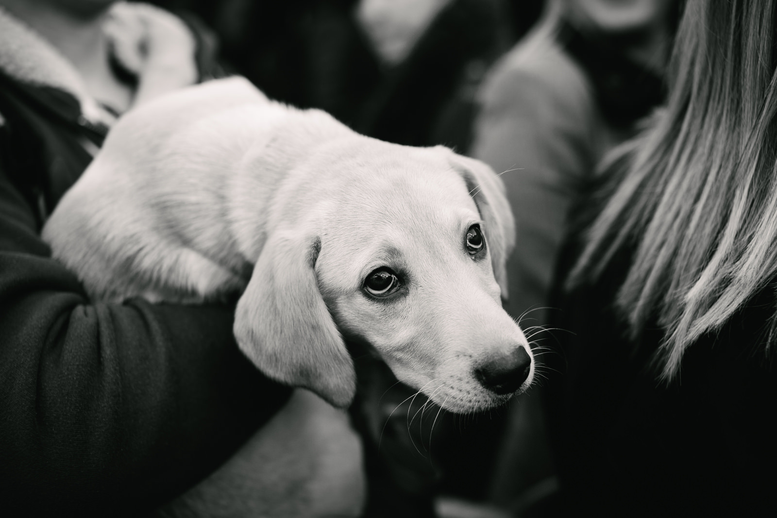 A puppy with sad eyes in London