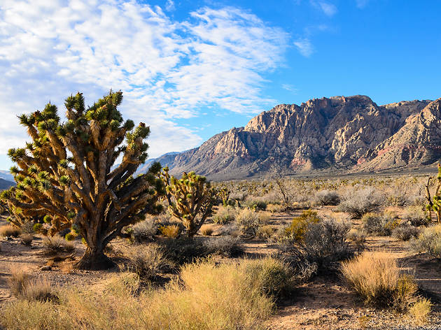 Awesome parks in Las Vegas to check out
