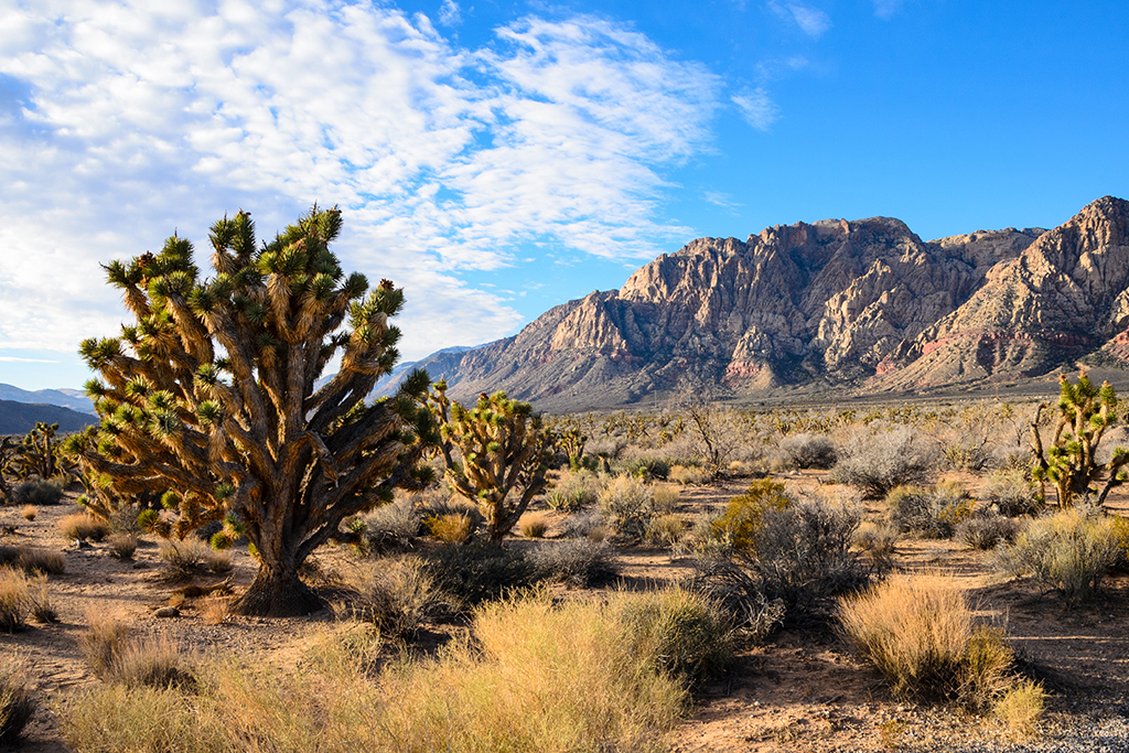 The 15 best parks in Las Vegas