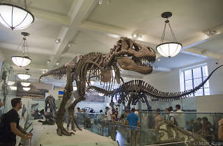 Hear an opera in the Museum of Natural History's dinosaur hall!