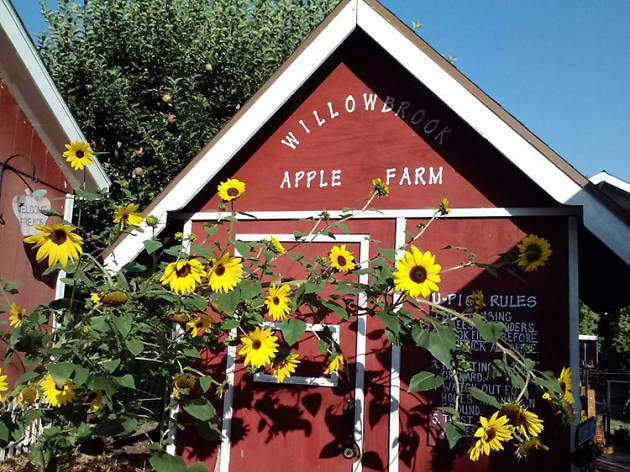 Willowbrook Apple Farm