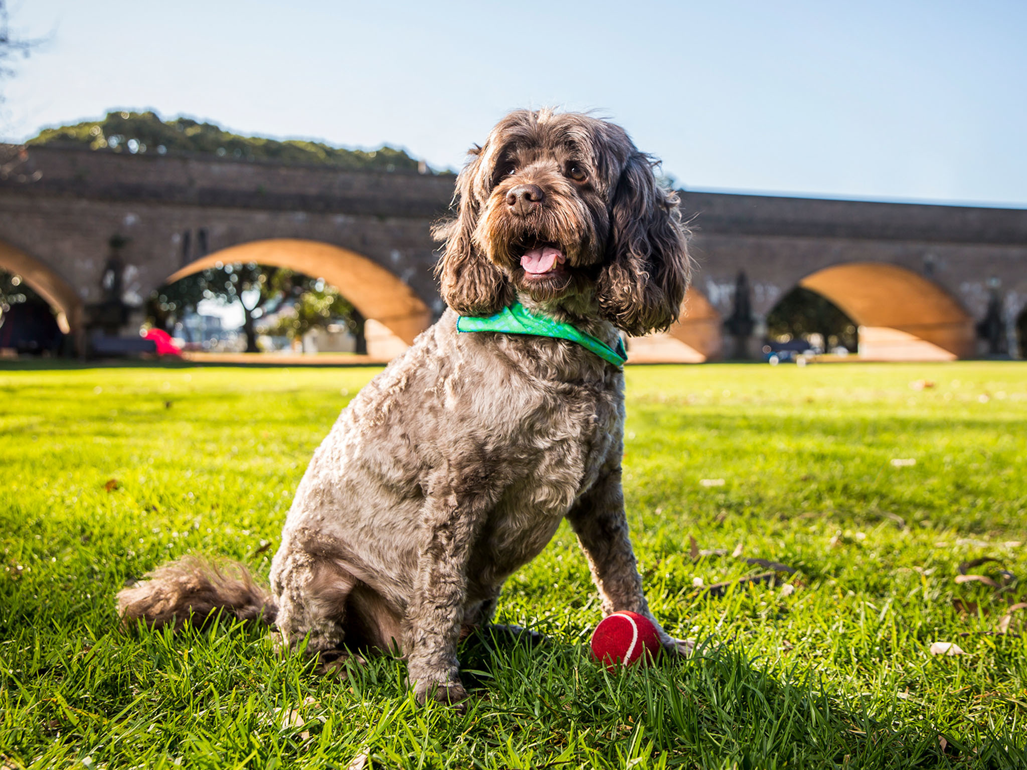 Pat all the pups at the RSPCA's Million Paws Walk this Sunday
