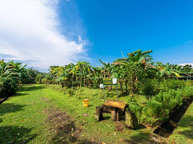 Best farms in Singapore