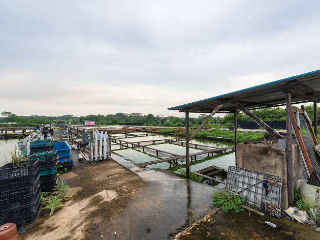 Khai Seng Fish Farm