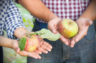 Riley's Stone Soup Farm & Heritage Orchard