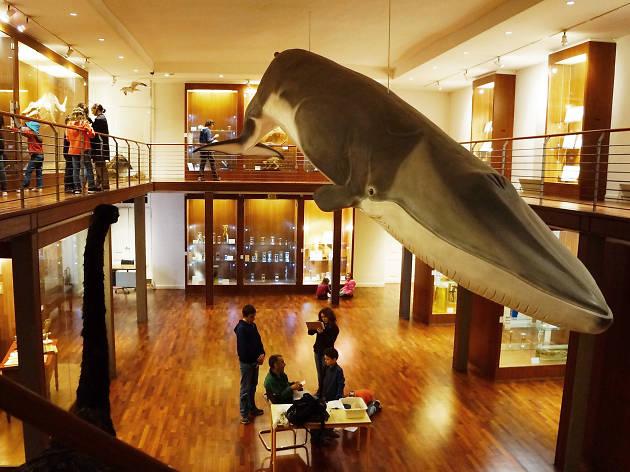 Museu Nacional da História Natural e da Ciência