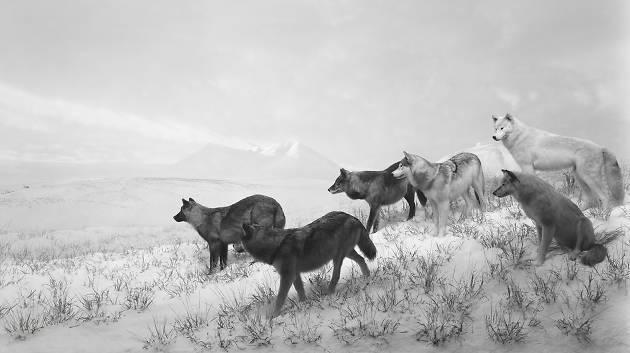 orchestre animaux (© Hiroshi Sugimoto)