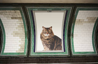 All the adverts at Clapham Common tube station have been replaced with pictures of cats