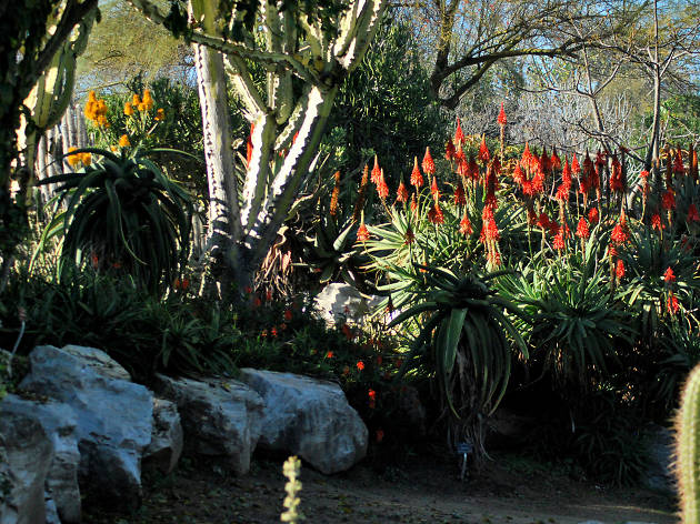 South Coast Botanical Garden