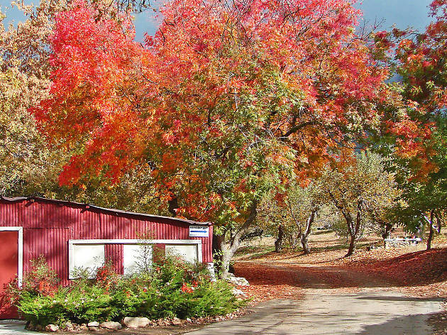 Where to see the best fall foliage around L.A.