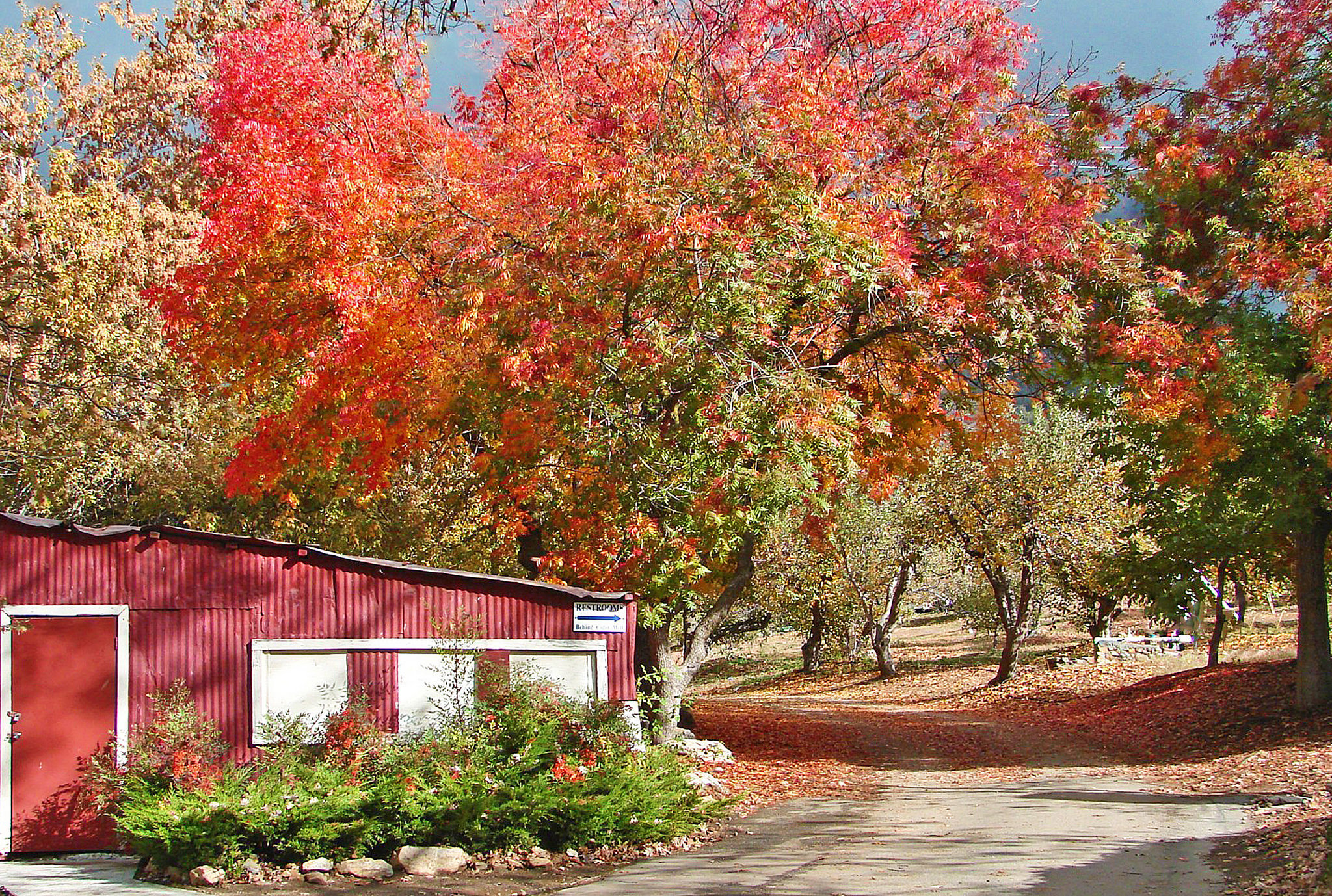 Where to see the best fall foliage around LA