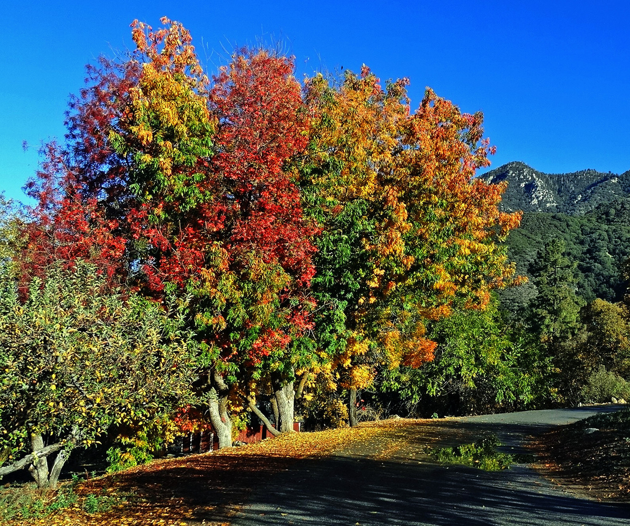 Find the Best Fall Foliage Around L.A. at These Spots
