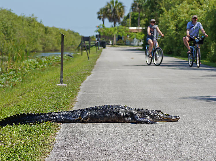 Shark Valley Trail   Miami, FL