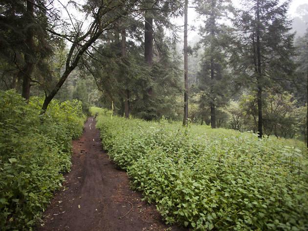 Bosque de Tlalpan en la Ciudad de México