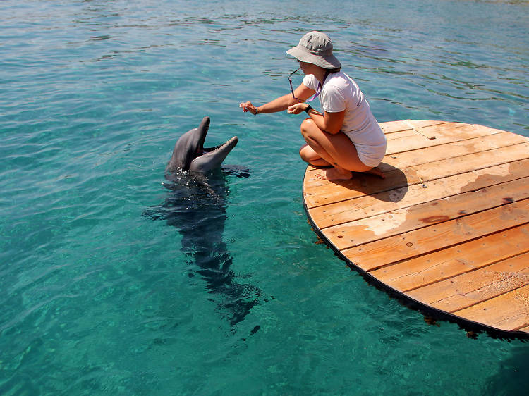 Le Dolphin Reef
