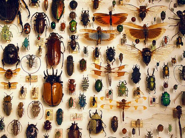 Col·leccions peculiars i absurdes que pots trobar al quiosc