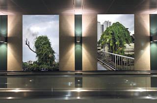 Singapore International Photography Festival