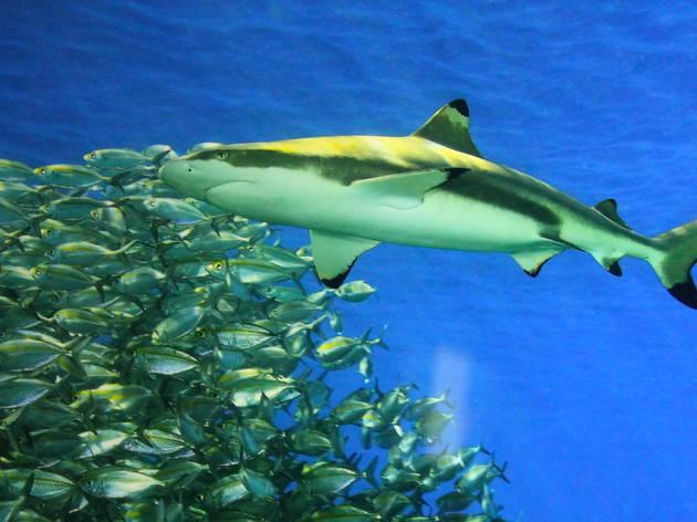 L'histoire des requins