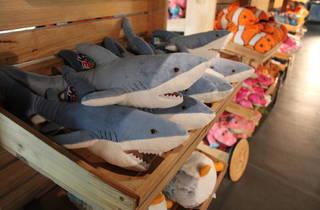 Requins Aquarium (© C.Gaillard)