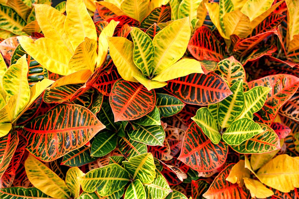 Plantes domèstiques per a inútils