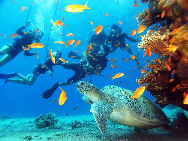 Snuba in the Red Sea