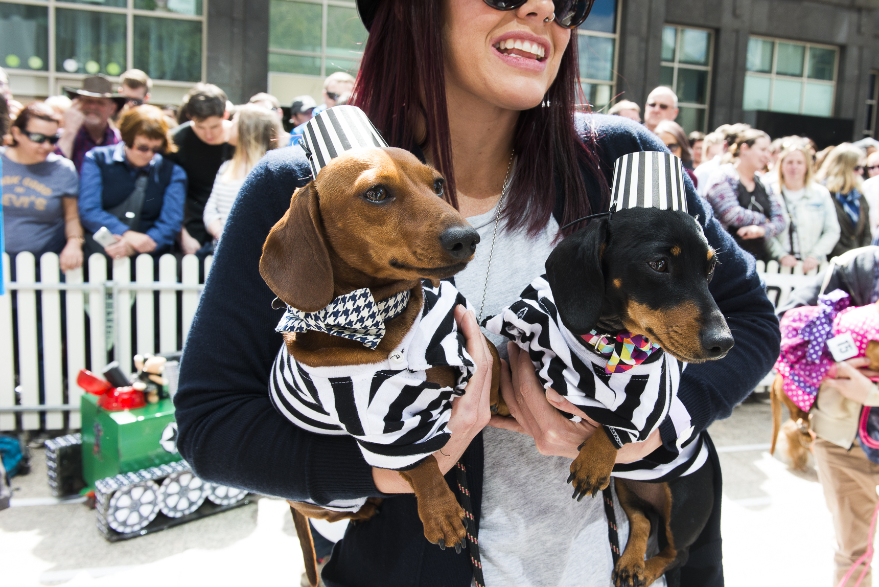 Here are the best dressed dogs at the Annual Dachshund Race