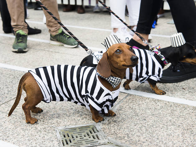 All the best dressed dogs at the Annual Dachshund Race