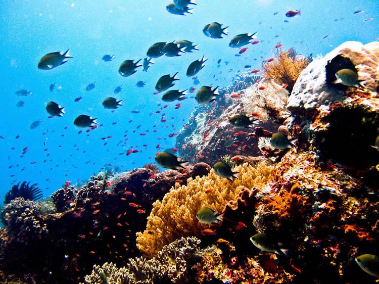 Komodo Islands, Indonesia