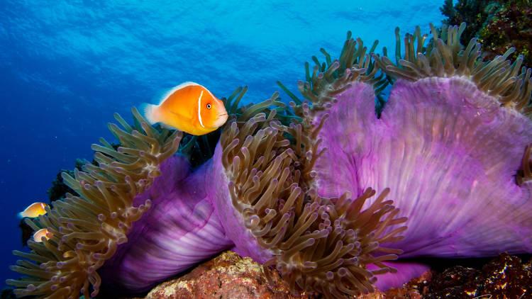 The best scuba diving spots in Asia