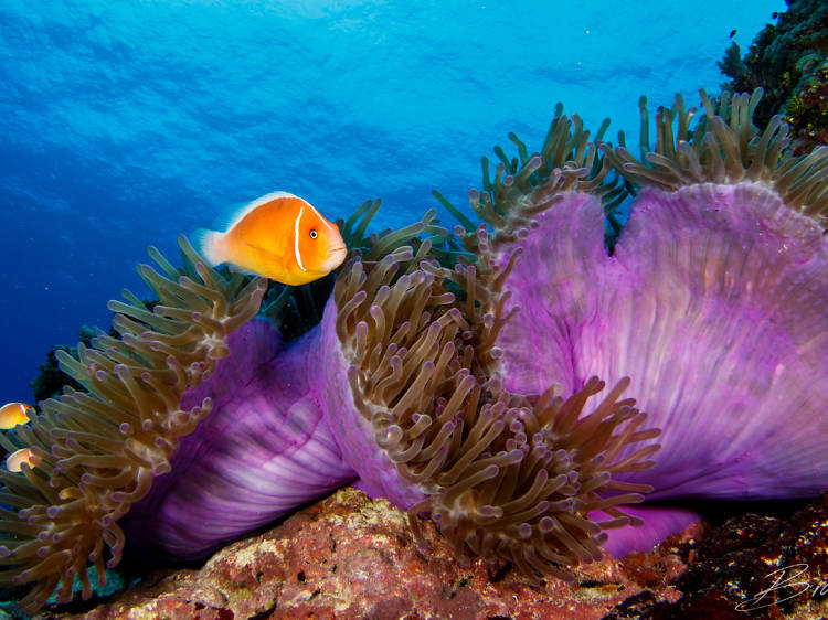 The best scuba diving sites in Asia
