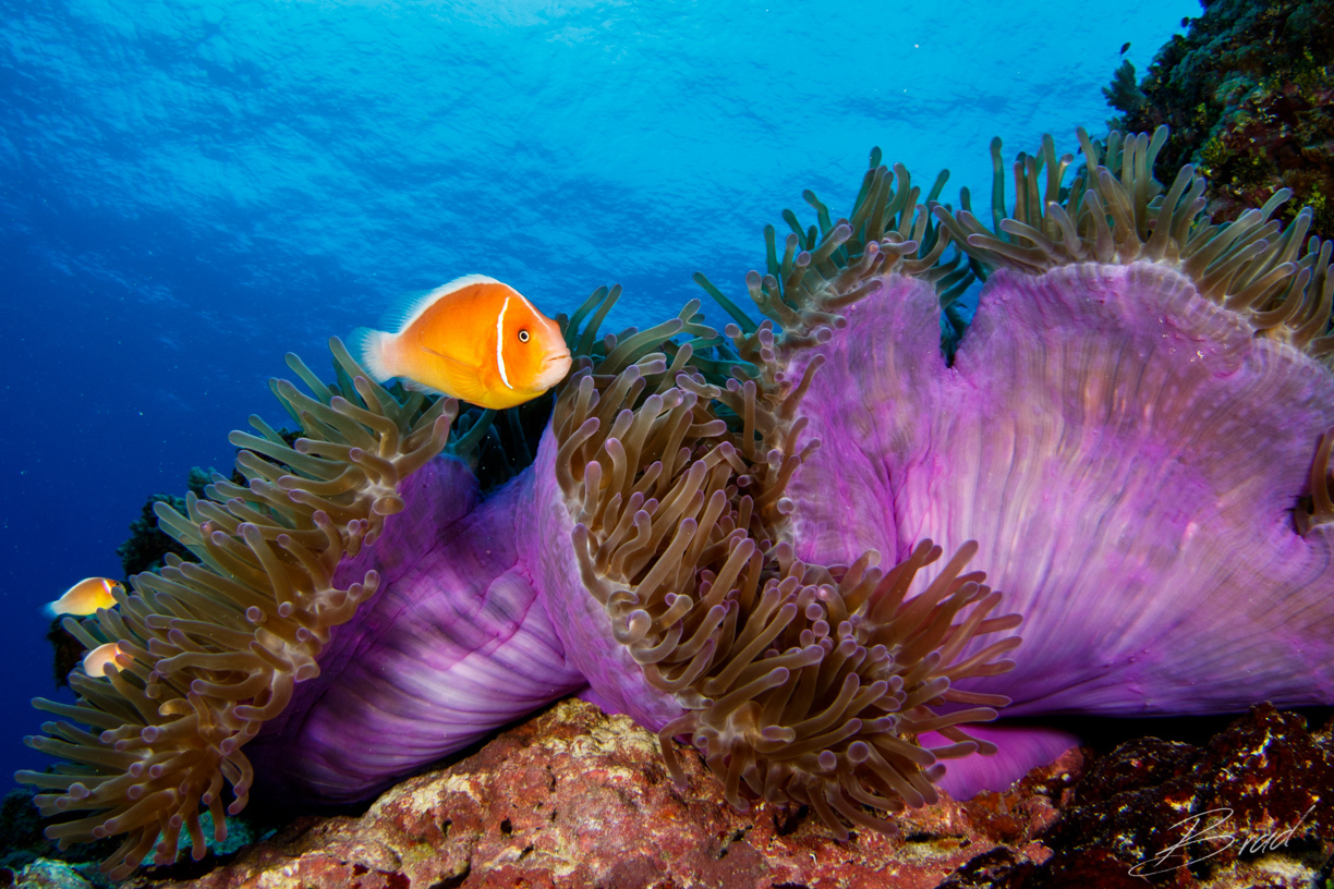 The best scuba diving spots in Asia