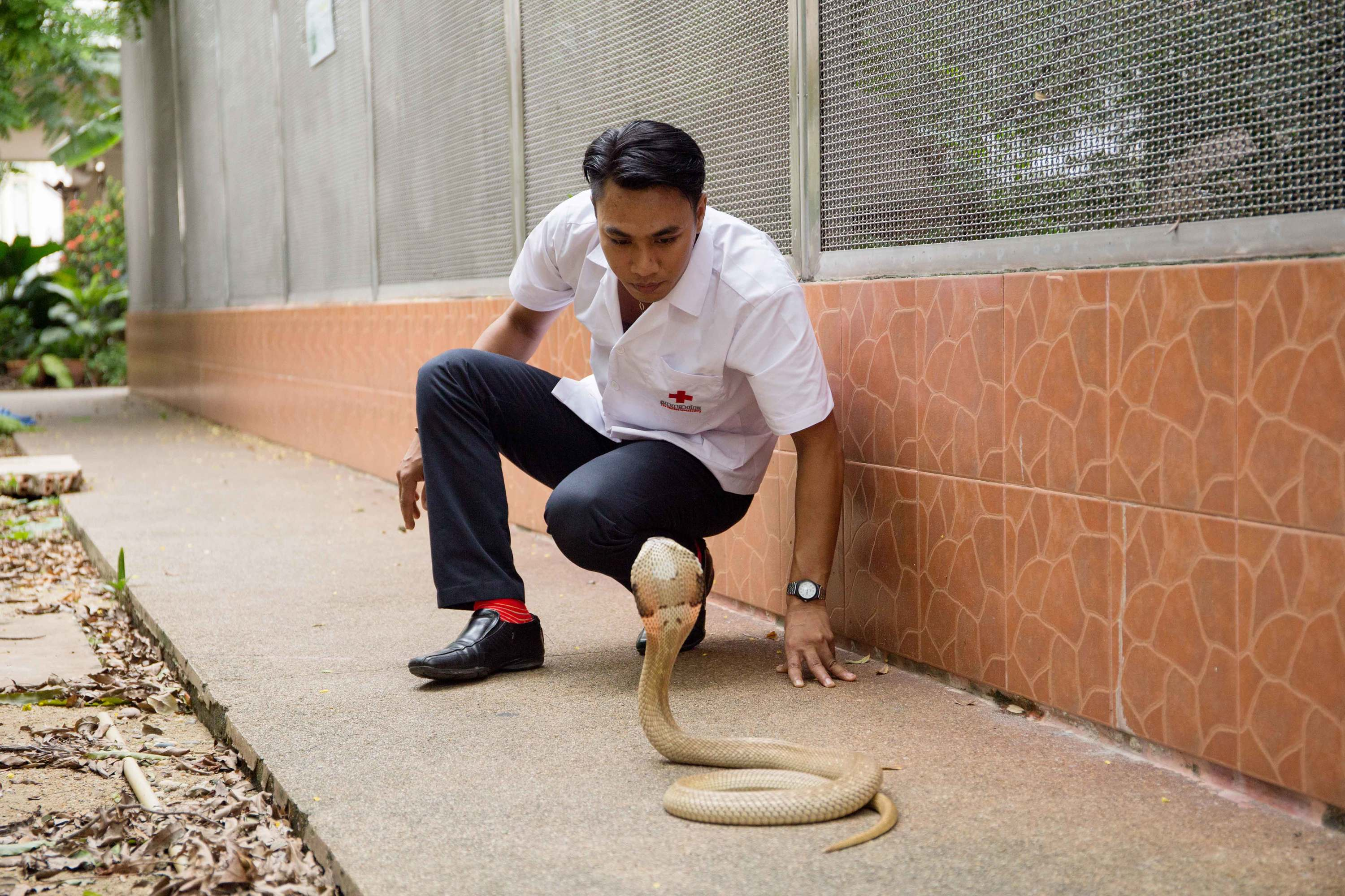 Quit your job, become a ... venomous snake caretaker