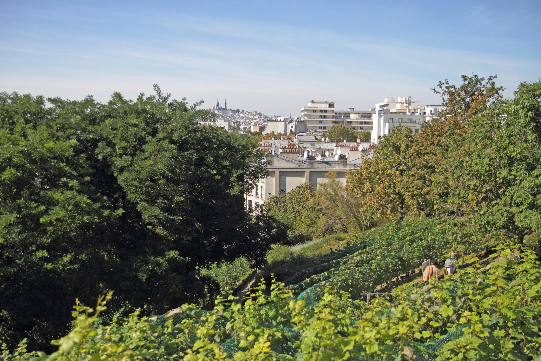 Fête des Vendanges butte Bergeyre vignes Paris vue Montmartre jardin