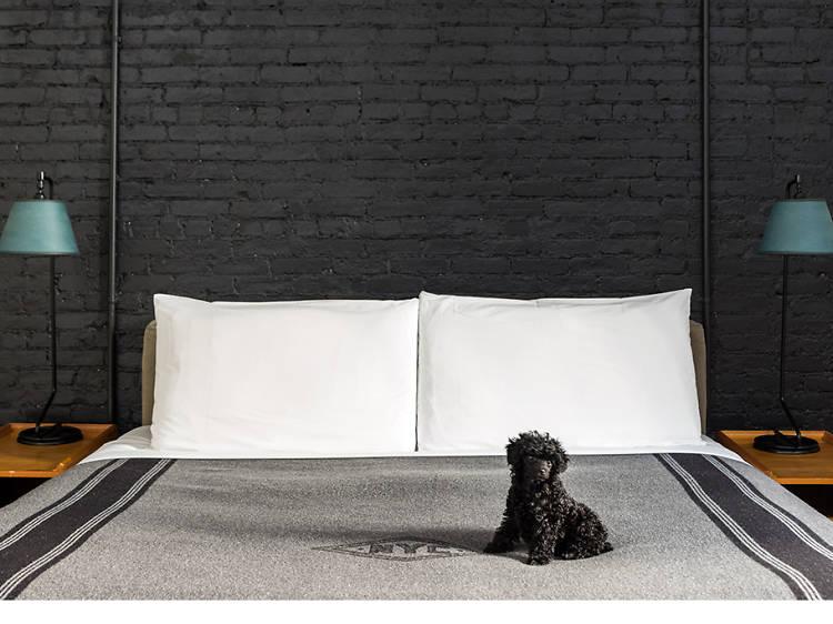 13 pet-friendly hotels in America
