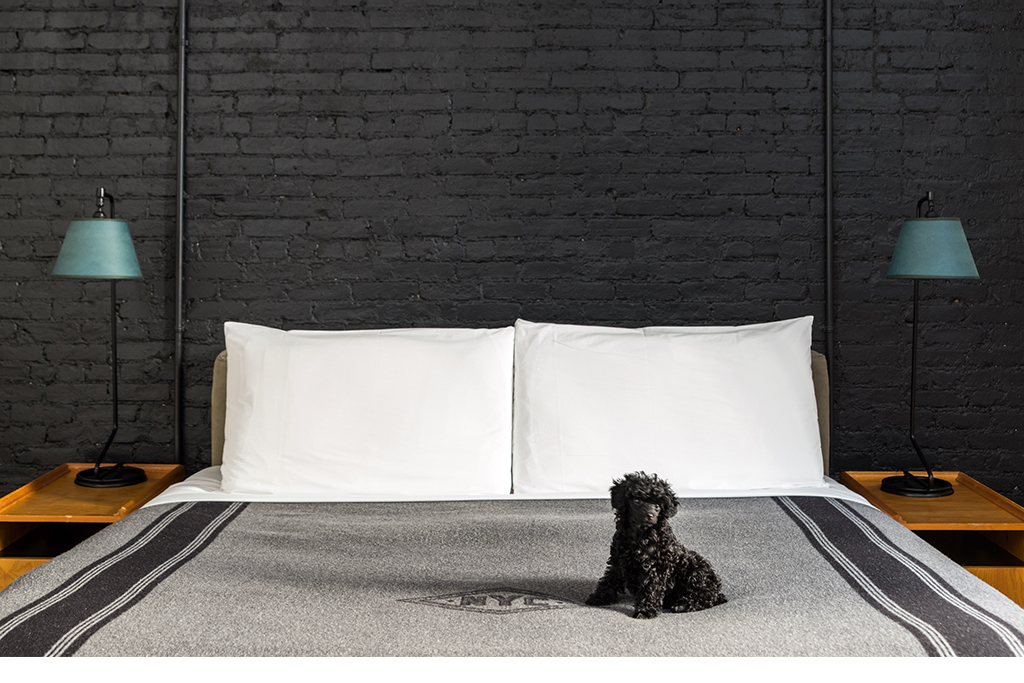 13 pet-friendly hotels in America