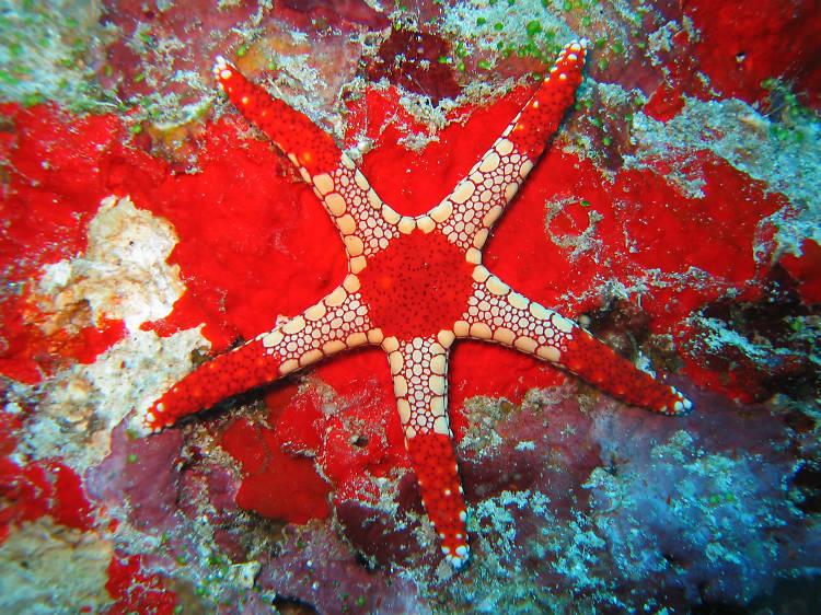 Starfish and sea cucumbers