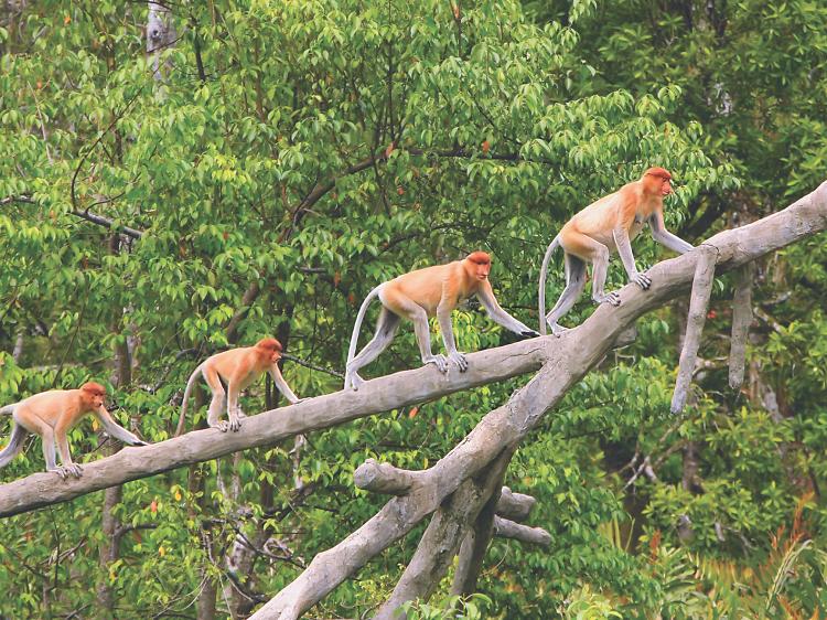 More than orangutans: Animal spotting in Borneo