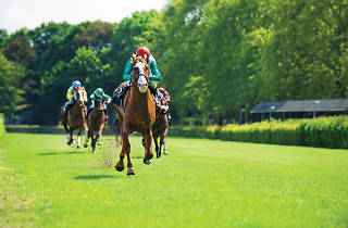 Horse racing in Nuwara Eliya