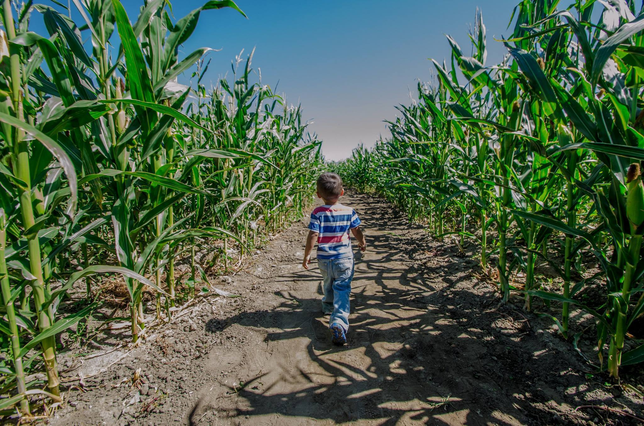 The best corn mazes in Los Angeles