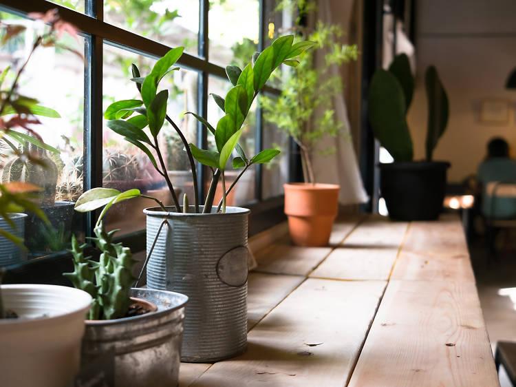 Cultiver son jardin... en appartement