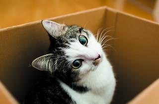 El gato de Schrödinger: ¿está vivo y/o muerto?