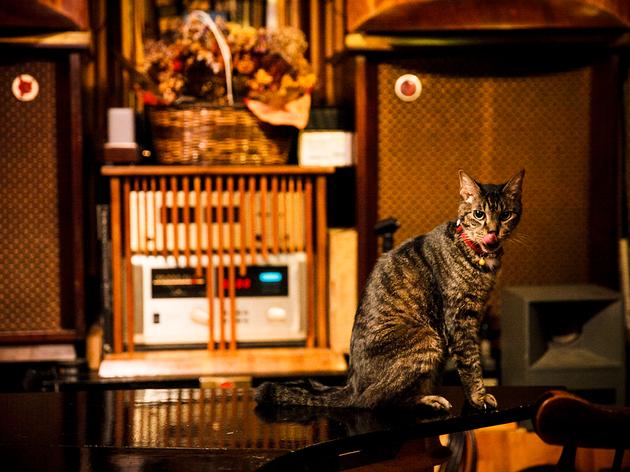 ジャズ喫茶 映画館