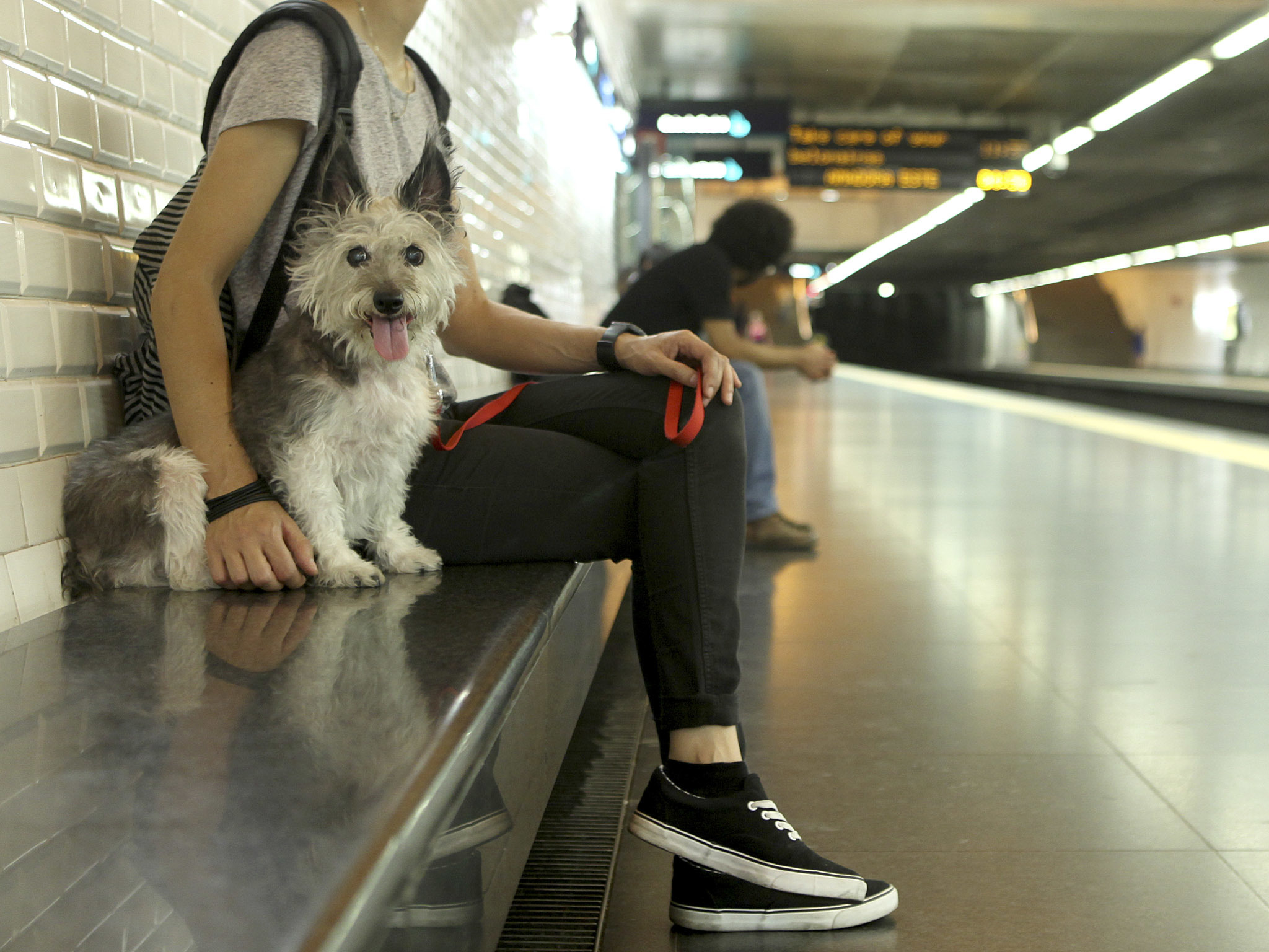 Polly no metro