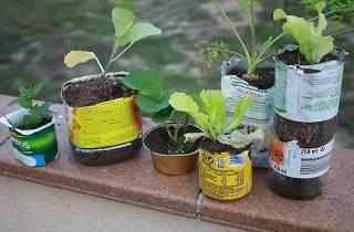 Encuentro de agricultura urbana 2016