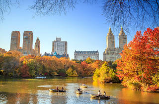 Fall foliage in New York