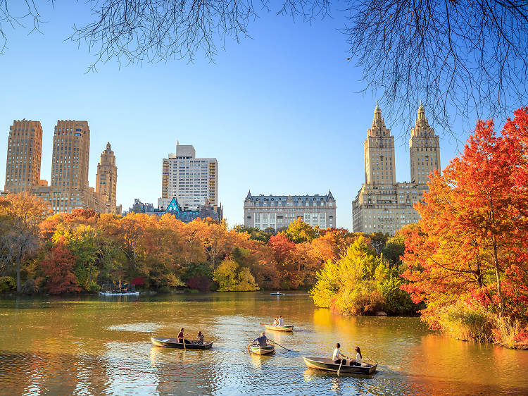 New York's official fall foliage report is here!