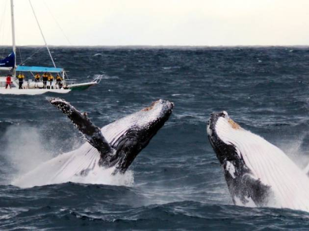 Whale Watching with Imagine Cruises