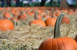Harvest Fest and Pumpkin Patch