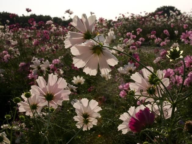(Photo: Chiyoko Tsuchida)